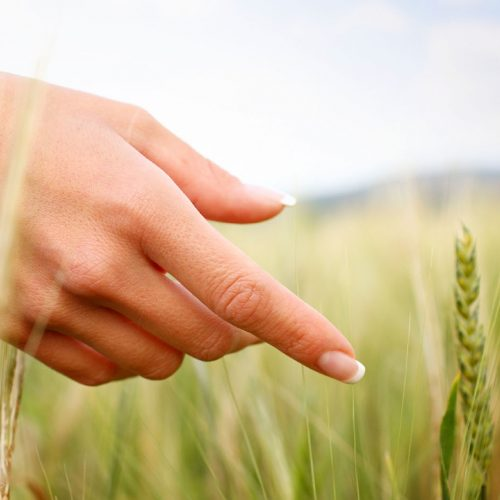 Hand Kornfeld